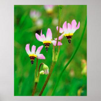 代表団の流星の野生の花は公園を引きずります ポスター
