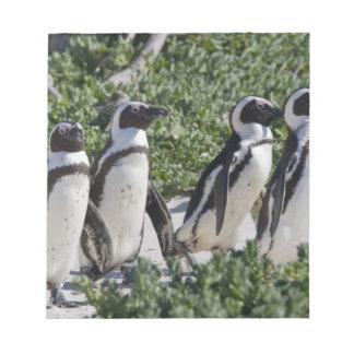 以前ろばとして知られているアフリカのペンギン、 ノートパッド