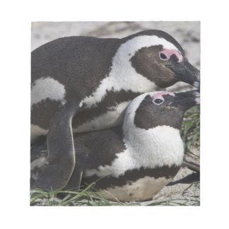 以前ろば2として知られているアフリカのペンギン、 ノートパッド