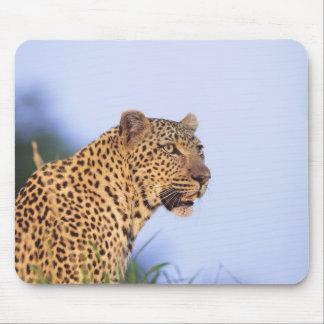 休んでいる成人男子のヒョウ(ヒョウ属のpardus) マウスパッド