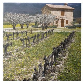 休止状態のブドウ園、フルーツは、石造りの家活気付きます、 タイル