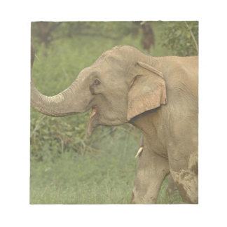 伝達し合っているインド/アジアゾウCorbett 2 ノートパッド