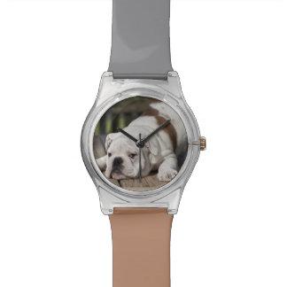 伸びている英国のブルドッグの子犬 腕時計