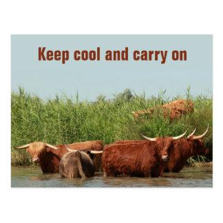 保ち、続けていっているクールな長角牛牛 ポストカード