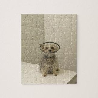 保護つば、クローズアップを身に着けているテリア犬 ジグソーパズル