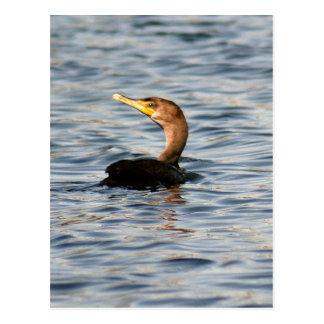 倍によって頂点に達される鵜の鳥の写真の郵便はがき ポストカード