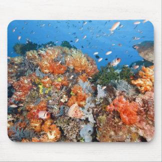 健康な礁の構造、Komodoの国立公園 マウスパッド
