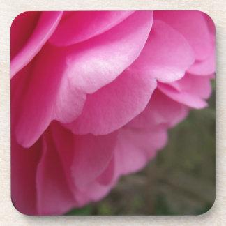 側面からのピンクのツバキの花 コースター