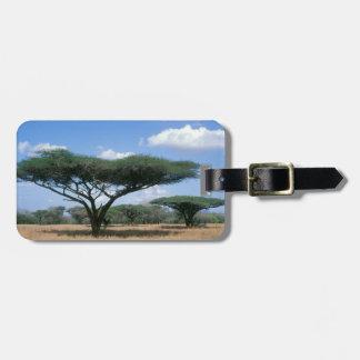 傘のとげのアカシア(アカシアのtortilis)、Mkuze ラゲッジタグ