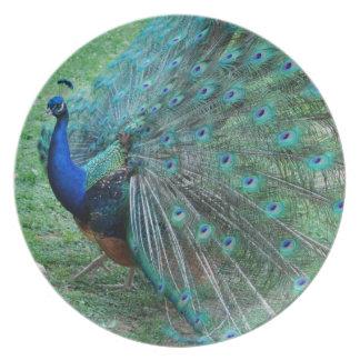優美な孔雀のparadisiac鳥 プレート