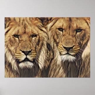 兄弟姉妹のライオン ポスター