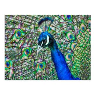 充電された孔雀の頭部 ポストカード