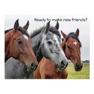 先生の郵便はがきからの新しい友人の馬の歓迎 ポストカード