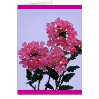 全くピンク カード