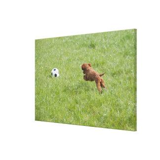 公園のフットボールの後の飼い犬のランニング キャンバスプリント