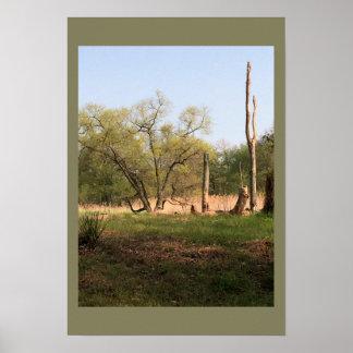 公園の木 ポスター