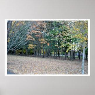 公園の秋の木の写真 ポスター
