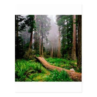 公園の落ちたなナースの丸太のレッドウッドカリフォルニア ポストカード