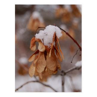 公園の降雪 ポストカード