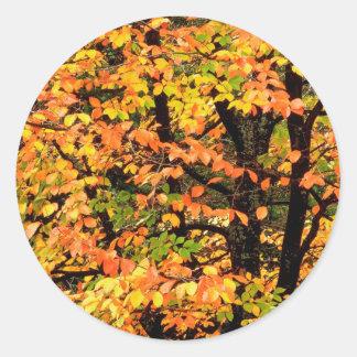 公園ポートランドオレゴンの秋のブナの木 ラウンドシール