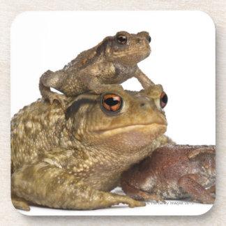 共通のヒキガエルおよび彼女の赤ん坊- bufoのbufo --を生み出して下さい コースター