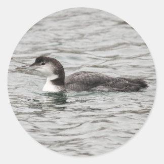 共通の水潜り鳥 ラウンドシール