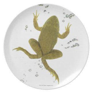 共通の緑カエル プレート