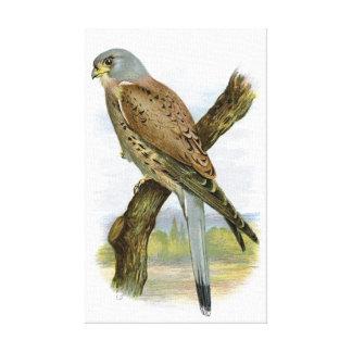 共通のKestrel - Falcoのtinnunculus キャンバスプリント