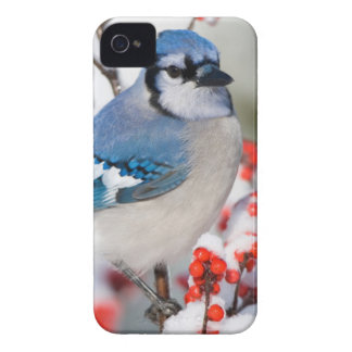 共通のWinterberryのアオカケス Case-Mate iPhone 4 ケース
