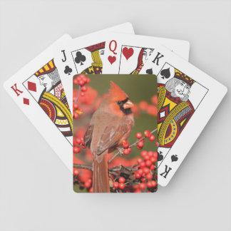 共通のWinterberryの北の(鳥)ショウジョウコウカンチョウ トランプ