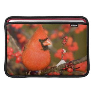 共通のWinterberryの北の(鳥)ショウジョウコウカンチョウ MacBook スリーブ