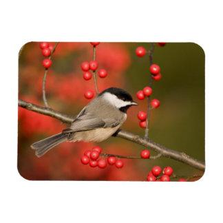 共通のWinterberryの薮のカロライナ《鳥》アメリカゴガラ マグネット