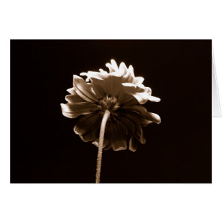 内気な花 カード