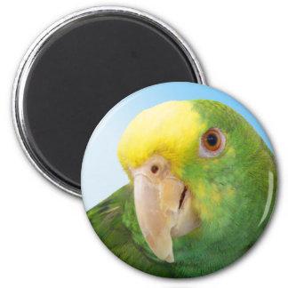 写真の二重黄色い先頭に立たれたアマゾンオウム マグネット
