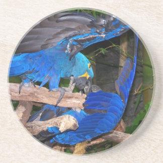 写真の写真を戦っている青いコンゴウインコのオウム コースター