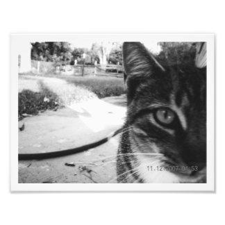 """写真の無名虎猫""""1962年"""" フォトプリント"""