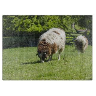 写真を牧草を食べているヤコブのヒツジ カッティングボード