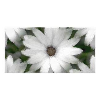 写真カード-白のアフリカデイジー カード