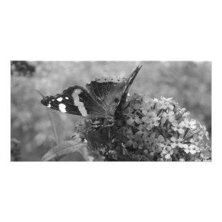 写真カード- Butterfly黒い及び白の海軍大将 カード