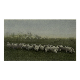 写真1918年を牧草を食べているヒツジ ポスター