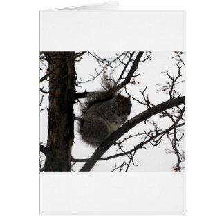 写真302.jpg グリーティングカード