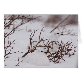 冬によって白後につかれるライチョウ カード