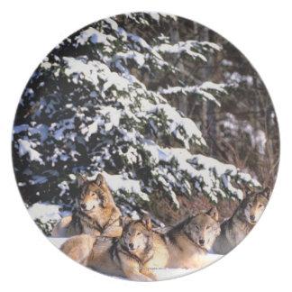 冬のオオカミパック プレート