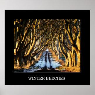 冬のブナ ポスター