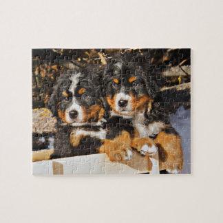 冬の愛らしい子犬 ジグソーパズル