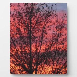 冬の木および日没のプラク フォトプラーク