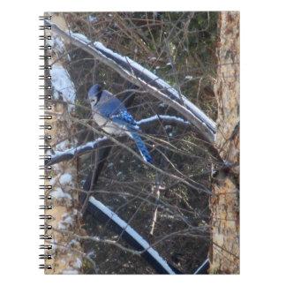 冬の木のアオカケスの鳥 ノートブック