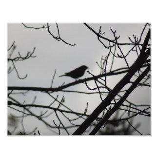 冬の木のロビンのシルエット フォトプリント