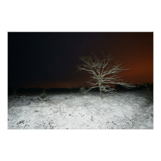冬の木 ポスター