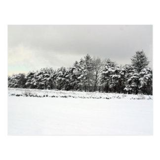 冬の松の木の無限ライン ポストカード
